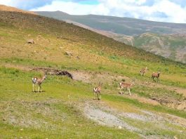 How Dahua Video Monitoring Solution Protects Endangered Species